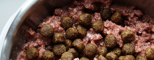 Nourriture humide pour chien