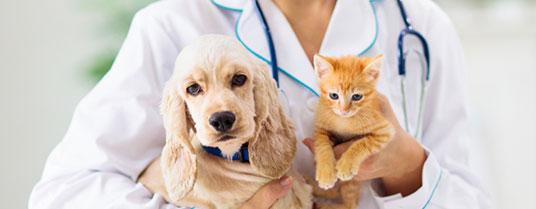 Laryngite pharyngite chien chat