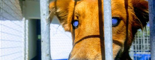 keratite chien