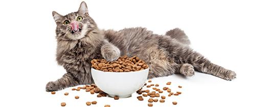 quantité de nourriture pour chat stérilisé